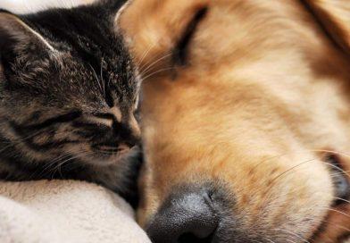 cani e gatti convibenza